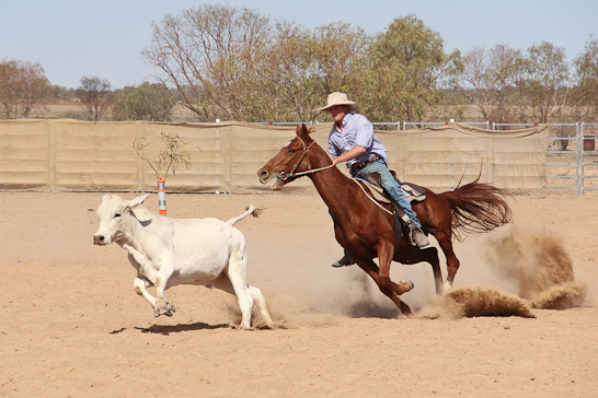 Campdraft in Birdsville