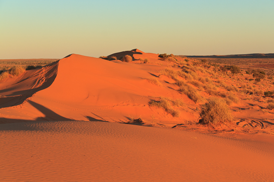 Sonnenuntergang auf der Big Red in der Simpson Desert